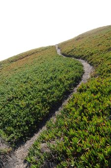 Free Ice Plant Field With Dirt Path Royalty Free Stock Photography - 17670437