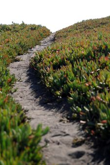 Ice Plant Field With Dirt Pathway Stock Photos