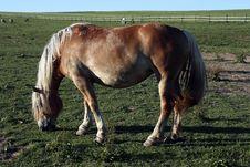 Free Horse Stock Image - 17670721