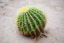 Free Cactus On Sand Stock Photography - 17671352