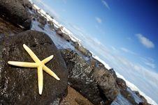 Free Yellow Starfish Royalty Free Stock Photos - 17672998