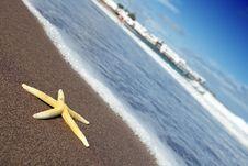 Free Yellow Starfish Royalty Free Stock Photo - 17673075