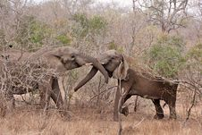 Free African Elephant Stock Images - 17673534