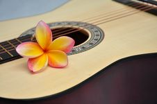 Free Tropical Melody Stock Photography - 17674442