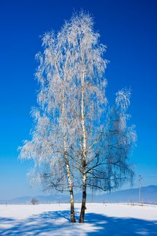 Free Winter Tree Stock Photos - 17674493
