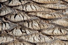 Free Palm Tree Texture Stock Images - 17674524