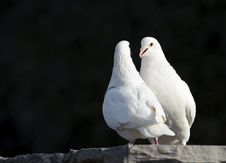 Free Two Loving White Doves Royalty Free Stock Image - 17674966