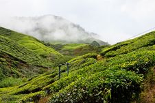 Free Tea Plantation In The Cameron Highlands Royalty Free Stock Images - 17676929