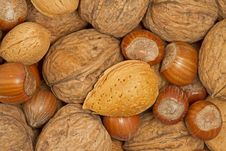 Free Various Nuts Stock Photos - 17677723