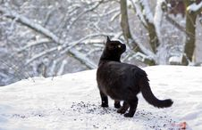 Free Black Cat In Snow Royalty Free Stock Photos - 17677828