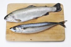 Free Fresh Fish On The Worktop Royalty Free Stock Image - 17677886