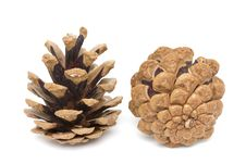 Free Two Pine Cones Royalty Free Stock Images - 17678429