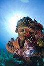Free Coral Reef - Purple Vase Sponge Stock Photo - 17680910