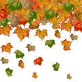 Free Autumnal, Red Leaves Of Mable Royalty Free Stock Photos - 17689038