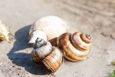 Free Snail Shells On A Sand In A Lake Shallow Stock Photos - 17680143