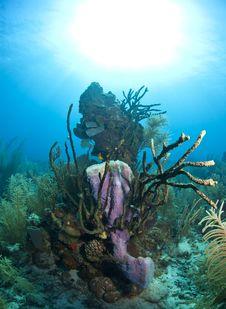 Free Coral Reef - Purple Vase Sponge Royalty Free Stock Photography - 17680867