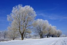 Free Hoard Frost Stock Images - 17681174