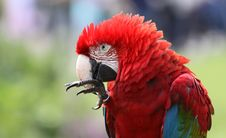 Free Macaw 02 Royalty Free Stock Photo - 17682985