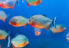 Free Colorful Fish Aquarium Stock Photo - 17683000
