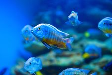 Free Colorful Fish Aquarium Stock Photography - 17683072
