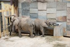 Free Elephants In A Zoo Stock Photography - 17683472