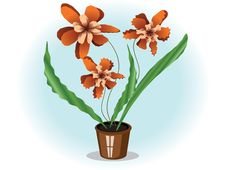 Free Orchid Royalty Free Stock Image - 17684196