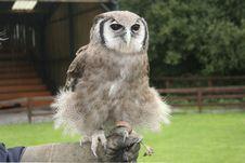 Free Verreaux S Eagle Owl, Bubo Lacteus Stock Photography - 17684292