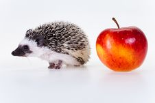Free Cute Hedgehog Royalty Free Stock Photos - 17686728