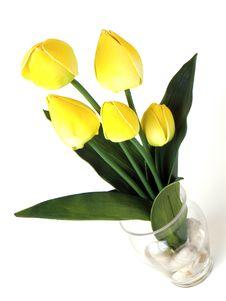 Free Yellow Tulips Royalty Free Stock Photo - 17687725