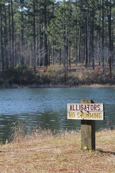 Free Alligators Sign Stock Photos - 17687733
