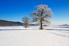 Free Trees Covered With Hoarfrost Royalty Free Stock Images - 17687819