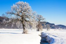 Free Tree Covered With Hoarfrost Stock Photography - 17687902