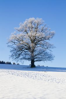 Free Tree Covered With Hoarfrost Stock Photography - 17688022