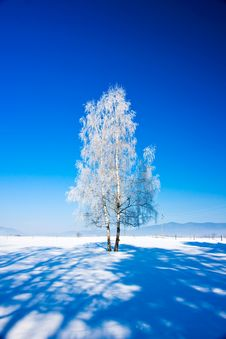 Free Winter Tree Royalty Free Stock Photo - 17688645
