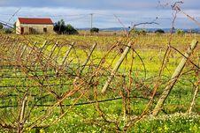 Free Vineyard  Portuguese Farm. Stock Image - 17689451