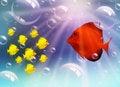 Free Fish Family Stock Image - 17693461