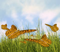 Free Butterflies Royalty Free Stock Photos - 17693478