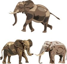 The World S Three Kinds Of Elephants Royalty Free Stock Images