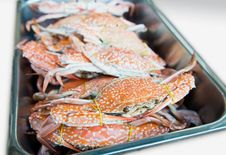 Free Steamed Blue Crab Royalty Free Stock Photography - 17690547
