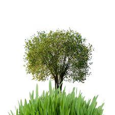 Free Tree Royalty Free Stock Photos - 17691598