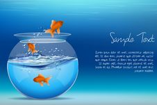 Fishes Jumping Out Of Tank Stock Image