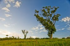 Free Tree In Field Stock Photos - 17694083