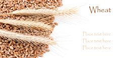 Free Wheat Stock Images - 17697614