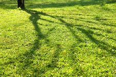 Free Shadow Vs. Tree Royalty Free Stock Image - 17698506