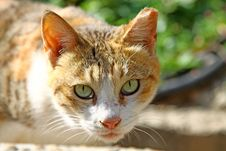 Free A Sleepy Cat Stares At People Royalty Free Stock Images - 17699039