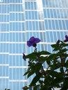 Free Urban View Stock Photo - 1778030