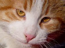 Free Cat Stock Image - 1772631