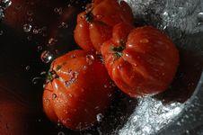 Free Tomato Stock Image - 1772741