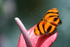 Free Butterfly Royalty Free Stock Photos - 1773328