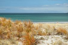 Free Beach Grass Stock Photos - 1774283